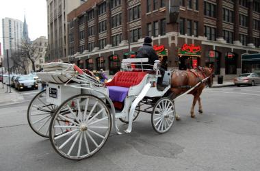 "An alderman is calling for an end to the horse-drawn carriage industry in Chicago, calling it ""unsafe and obsolete."""