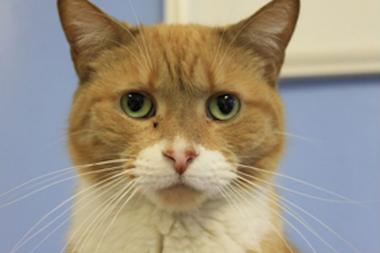 Creepers, Jeepers' brother, was a constant companion, and is looking for a permanent home.