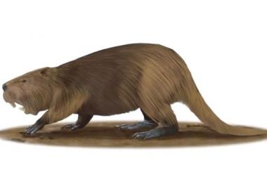 Giant Prehistoric Beaver's Discovery in Wicker Park Gets ...  Prehistoric