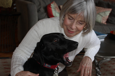 Labrador retrievers are the most popular dog in Chicago, based on city dog licenses. Two-year-old Java, who is owned by Beth Urech of the South Loop, is among those registered Labrador retrievers.