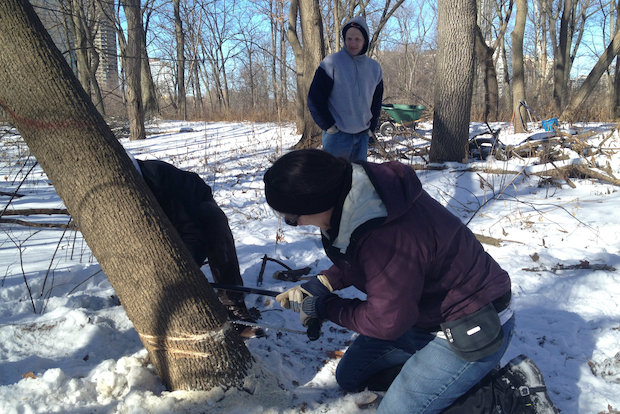 Despite freezing conditions, volunteers helped remove invasive plants on Saturday at the Bill Jarvis Migratory Bird Sancuary in Lakeview.