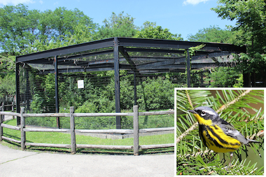 Indian Boundary Park's advisory council will host the bird-watching walk Sunday.