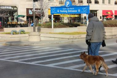 Tim Cross, 60, and his 12-year-old Queensland Heeler Murph, walk the outskirts of Millennium Park every day. Cross, who lives across the street from the park, said there's a dearth of park options for Downtown dogs and is holding out for Maggie Daley Park's unveiling in spring 2015.