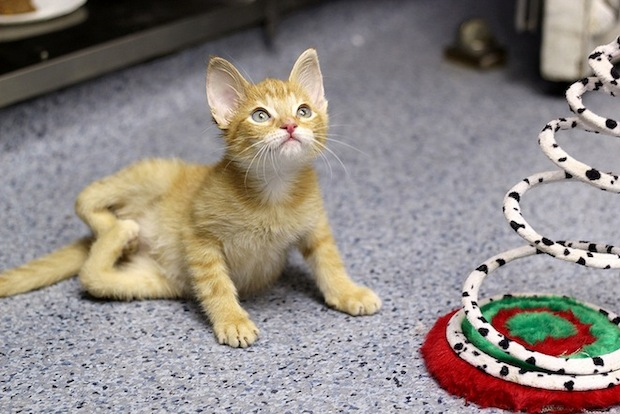 Uptown's Tree House Humane Society shared the story of Stockings, a kitty born with a severe disabillity.