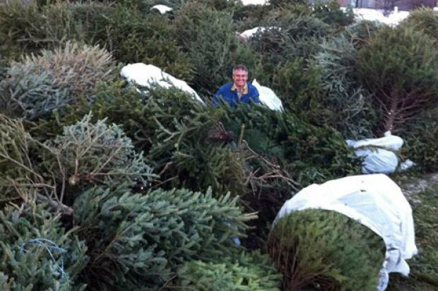 North Center neighbors collected nearly 200 Christmas trees for recycling.