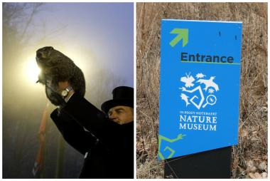 Groundhog handler John Griffiths holds Punxsutawney Phil after he saw his shadow predicting six more weeks of winter (l). The Peggy Notebaert Nature Museum says it has its own animal that can predict future weather.