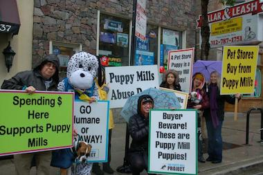 Supporters of the Puppy Mill Project protest outside Collar & Leash last October.