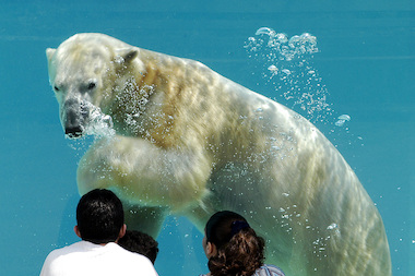 Lincoln Park Zoo will build a new habitat for polar bears.