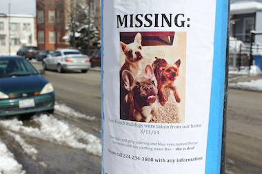 An Avondale couple whose French bulldogs have been missing since their home was burglarized Tuesday are offering a reward for the dogs' safe return.