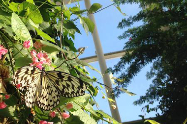 The nature museum offers access to the butterfly haven and other exhibits Tuesday night.