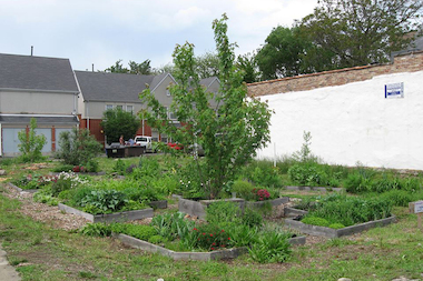 South Shore is in the running for neighbohood of the year for a community garden project at 75th and Coles.