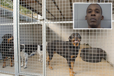 Police said Jonathan Hunter (inset) left a trail of blood as he was seen dragging the pit bull puppy in Austin.