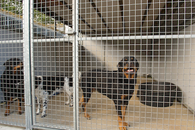 Dogs in a kennel can be seen in this file photo.