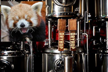 DryHop Brewers and the Lincoln Park Zoo are set to release a collaboration to benefit the zoo's red panda.
