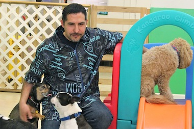 Jorge Segovia, owner of Happy Hounds in Lincoln Park, plays with the dogs at his doggie day care center.