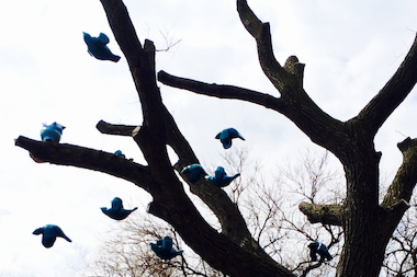 """Flock,"" by Margot McMahon uses a 125-year-old elm tree in Jackson Park."