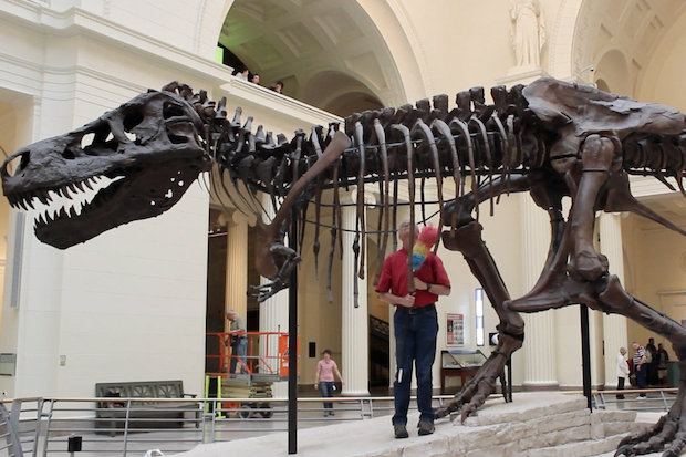 Sue, the Field Museum's beloved T. rex, is being moved to her own room while a titanosaur takes over the museum's main entrance hall.