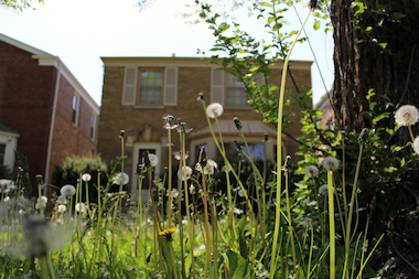 A frustrated neighbor outed Gov. Pat Quinn for letting his front lawn run wild with dandelions.