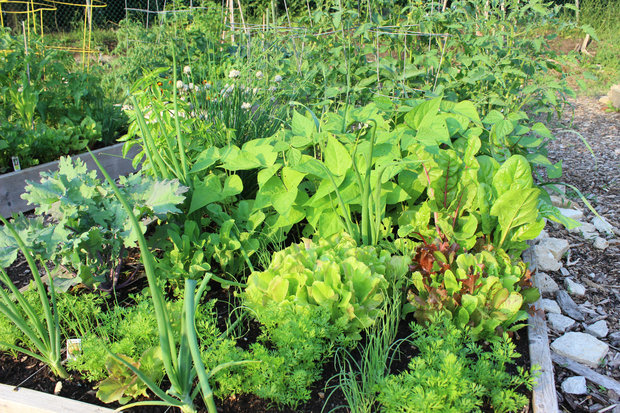 Master gardener Joan Murray will share tips for growing in small spaces Monday night at Sulzer Library.