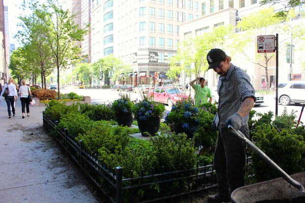 Magnificent Mile business owners get hyper competitive about their streetscapes for the annual Beautification Awards.