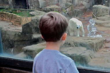 Three-year-old Haden Snyder, of Wrigleyville visited Lincoln Park Zoo Thursday morning to say goodbye to Anana the polar bear.