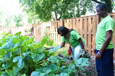 Katelynn Davis and Larry Rogers, Green Teens from Gary Comer Youth Center, examine plants in the DePaul Urban Garden Monday.