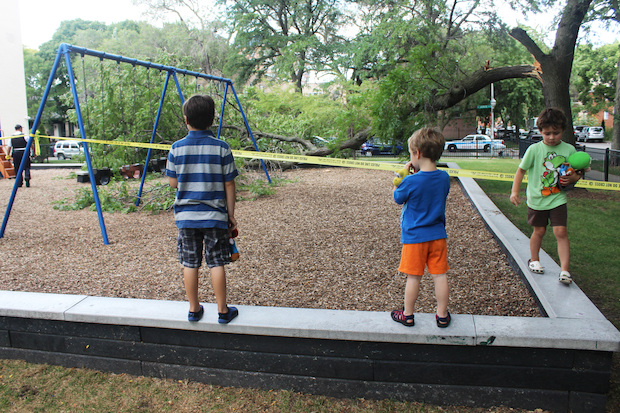 A large tree branch fell onto Touhy Park playground, injuring a babysitter, officials said.
