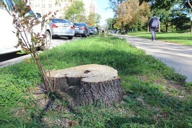 Openlands will replant on Saturday where ash trees have died from damage by the emerald ash borer.