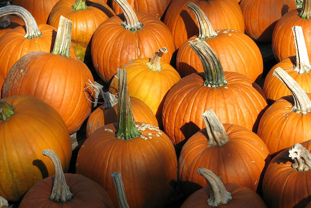 Kennedy Park will host a pumpkin patch from noon-4 p.m. Sunday. The event is free. Some activities will cost upward of $3.