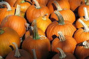 Kennedy Park To Host Pumpkin Patch Sunday