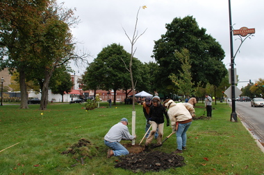 The young trees were planted along Humboldt Boulevard between Armitage and Shakspeare avenues on Oct. 4 as part of a comprehensive, homegrown tree inventory, the first of its kind on the city's boulevard system.