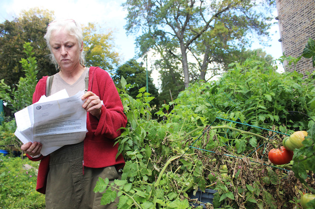 Cahill took over a vacant lot in 2011 and planted fruit trees, veggies and berries.