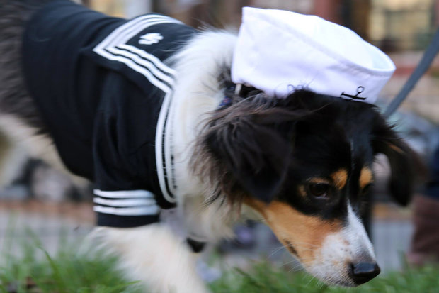 West Loop Vet Care will host a Howl-O-Ween costume party at Mary Bartelme Park Saturday afternoon