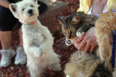 Animal Care and Control says it is reducing the number of lost pets that get euthanized.