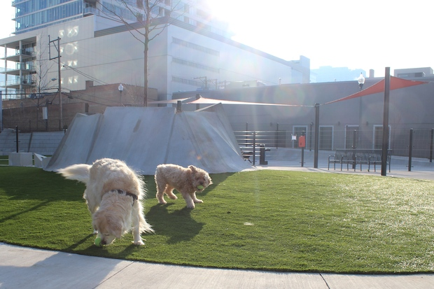 Several areas of the South Side are trying to be the first to get a dog park.