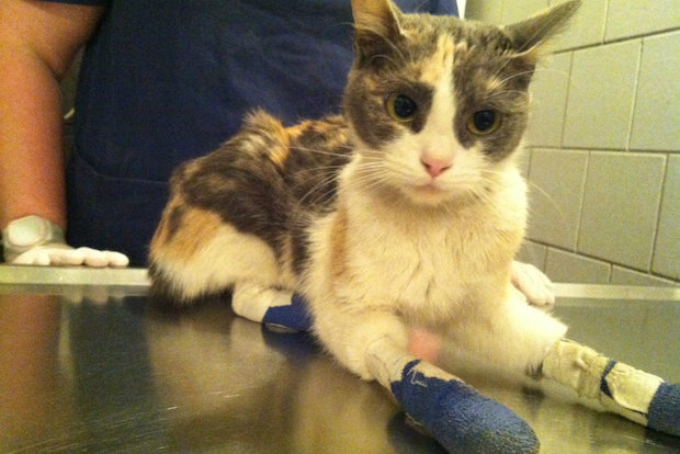 Sunny the cat is on the mend, and PAWS has taken in other felines suffering from the cold.
