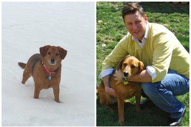 Dog Day Care Bucktown Chicago