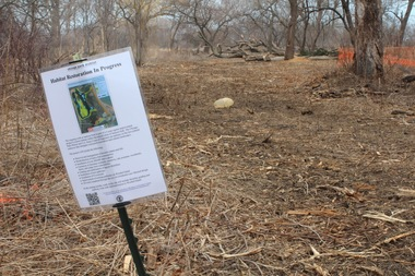 The Army Corps of Engineers is in the middle of a massive restoration effort on Wooded Island that has called for the removal of a third of the trees on the island.