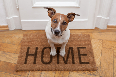 Jason Feldman gives pet owners tips on renting or buying real estate.