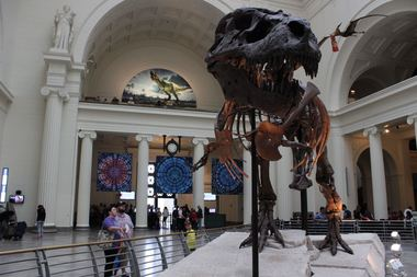 The Field Museum is asking for a price increase beginning in 2018.