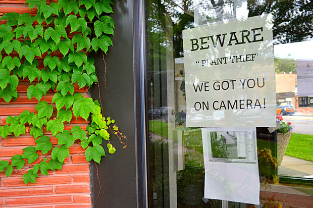 A stern warning was left for the plant bandit, should she return.