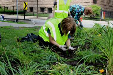 Volunteers replant daylilies in street gardens outside Washington Square Park in Gold Coast Chicago.