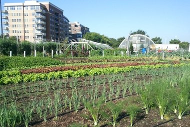City Farm in Old Town.