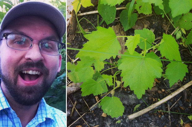 Kankakee Mallow plants were found on Langham Island in the Kankakee River on Aug. 1. Spearheading the discovery was Albany Park resident Robb Telfer.
