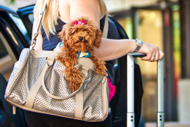 Metra will allow pets that fit into a small carrier to ride weekday trains during off-peak hours as part of a six-month trial beginning May 1.