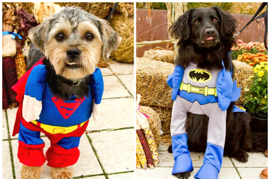 Dogs in costume are invited to take part in a Halloween contest and parade at Hotel Lincoln Saturday. It's also an adoption event.