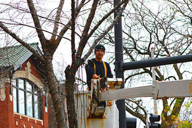 Sheridan Road in Rogers Park will soon glow with thousands of tiny white lights strung from trees.