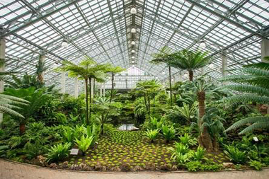 Christmas In Hawaii Enjoy Holiday Music At Garfield Park Conservatory Garfield Park Chicago Dnainfo