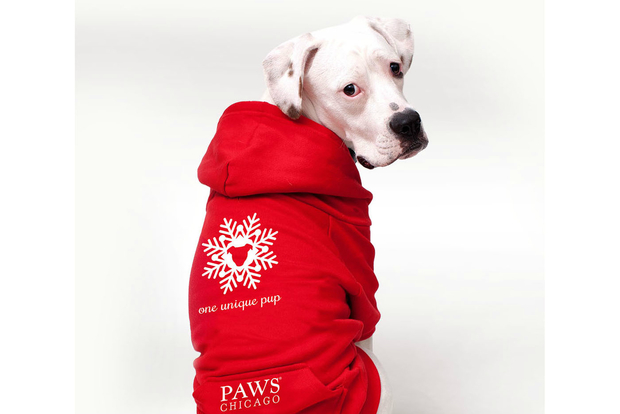 You can buy a hoodie for your dogs to benefit PAWS Chicago this holiday season.