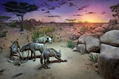 The new Hyena diorama opened Wednesday in the museum's Hall of Asian Mammals.